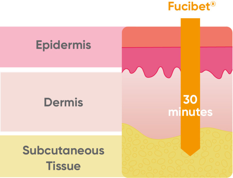 Visual showing Fucibet's penetration in 30 minutes from Epidermis to Subcutaneous Tissue